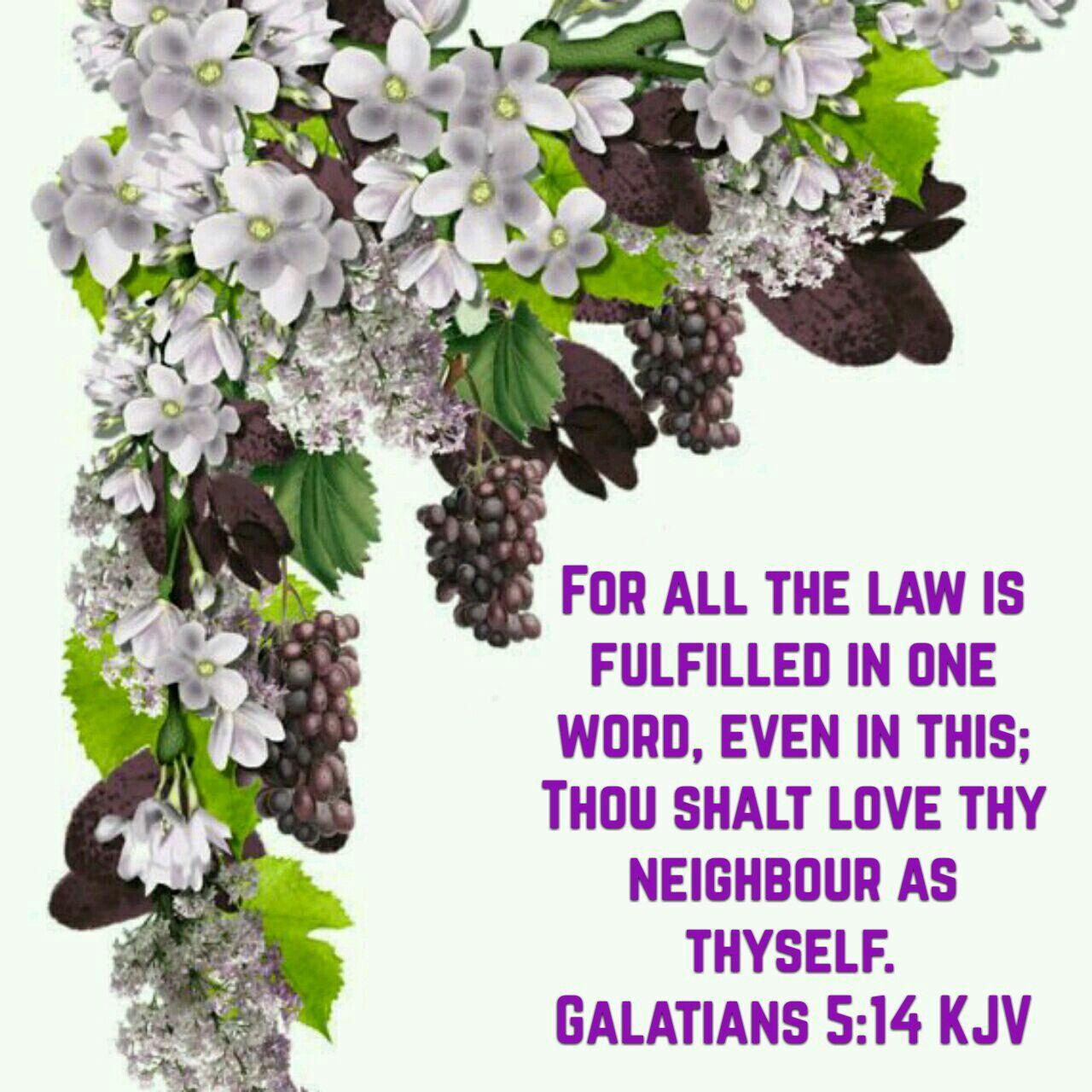 Salatians 5:14 quote